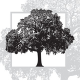 Realistic natural leafy tree isolated on white background. Abstract vector monochrome graphics illustration of foliage branches with leaves. - 214569292