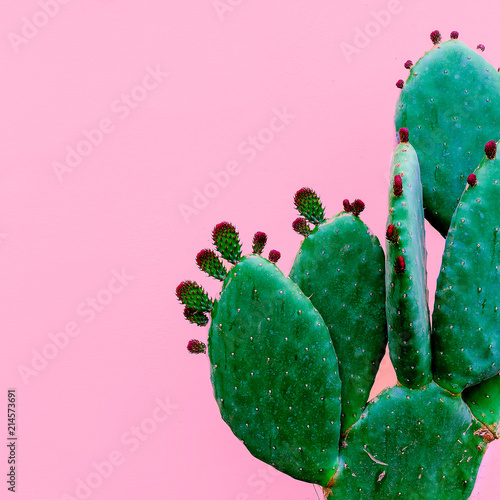 Cactus minimal. Plants on pink concept - 214573691