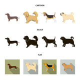 Pikinise, dachshund, pug, peggy. Dog breeds set collection icons in cartoon,black,flat style vector symbol stock illustration web.