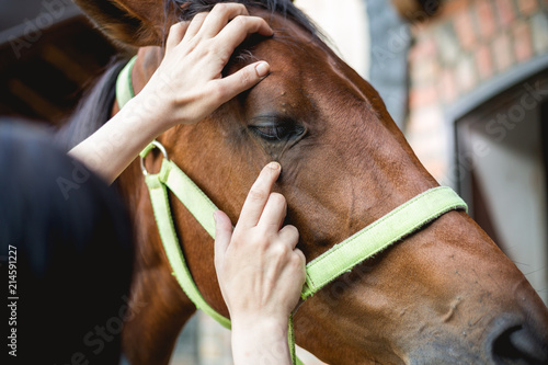 Vet checking horse's helth,eyes