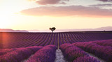 Beautiful landscape of lavender fields at sunset with dramatic sky. - 214591679