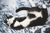 funny cat is sleeping