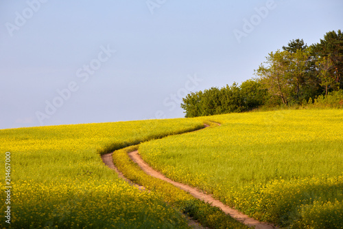 Fotobehang Oranje An ideal rural landscape. Road on the flowering meadow against the blue sky
