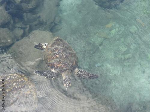 Foto Spatwand Schildpad tartaruga di mare nell'acqua limpida