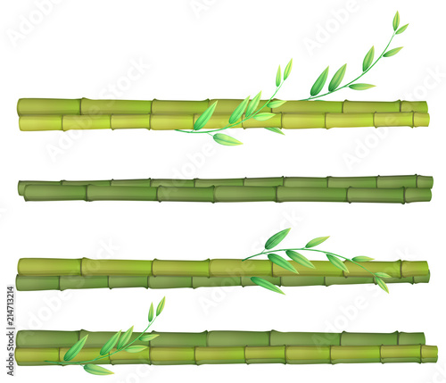 A set of bamboo on white background - 214713214