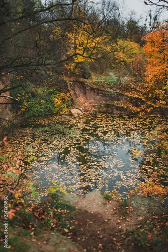 Fotobehang Grijze traf. Idillic autumn landscape of park, lawn, yellow trees and lake