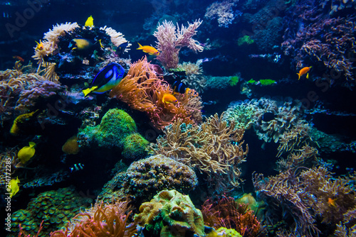 Foto Murales Colorful coral reef with fish and stone