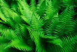 Tropical leaves. Floral design background. - 214772414