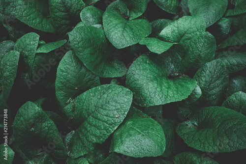 Green leaf texture. tropical leaves