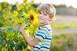 Leinwandbild Motiv Adorable little blond kid boy on summer sunflower field outdoors