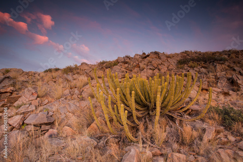 Canvas Lavendel Panoramic landscape photo views over the kalahari region in South Africa