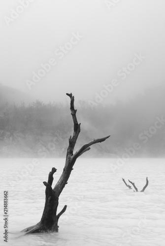 Tree - 214883662