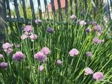 flower 002 - 214886254