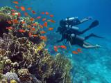 Three divers among fish - 214896890