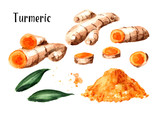 Turmeric root and powder set. Watercolor hand drawn illustration isolated on white background - 214907030