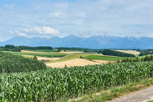 美瑛の丘と大雪山