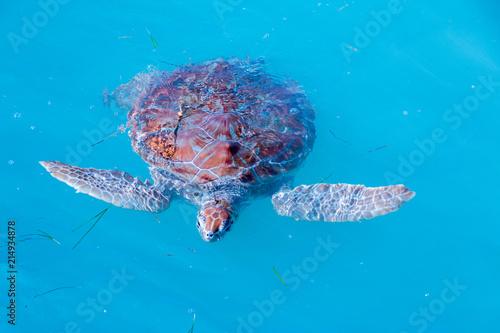 Foto Spatwand Schildpad Tortuga acuática