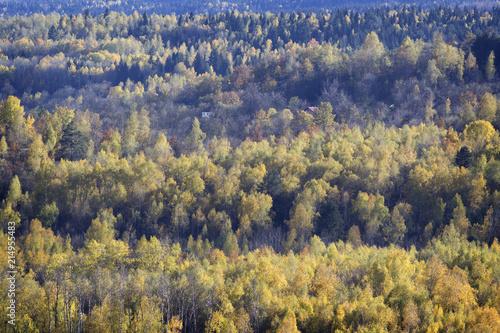 Fotobehang Herfst The beginning of autumn - colored trees