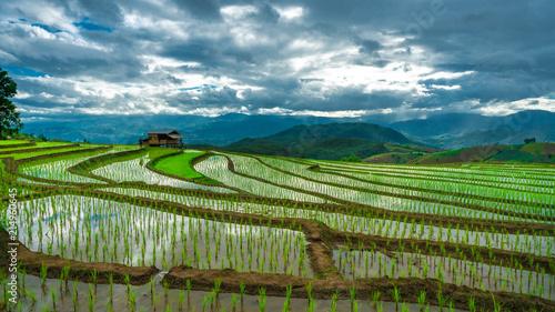 Aluminium Blauwe jeans Mountain Rice Field