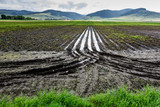 Flooded Potato Field. Agriculture ground after rain under water. Flooded agriculture fields. - 214961046
