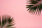 Trendy summer tropical leaves on pink background.  Bright summer color. Minimal style.