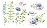 vector floral elements for your vintage posters and backgrounds with natural meadow flowers, leaves and a cornflower