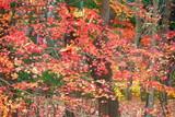 公園のもみじの風景12 - 215014052