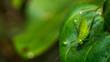 green grasshopper on a leaf
