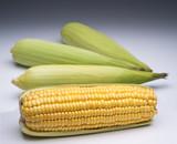 Milho verde - 215021429