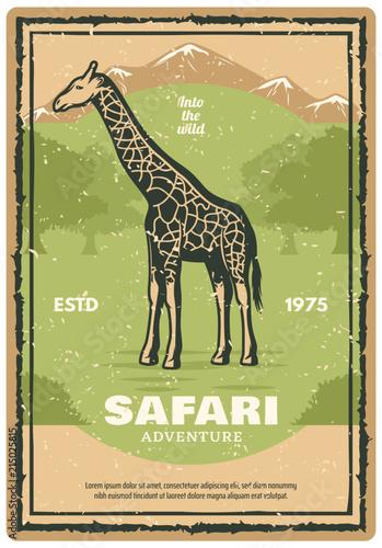 Poster African safari retro banner with giraffe animal