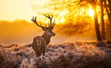 Pleasant Morning Deer