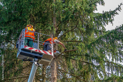 Klettergurt Für Baumfällarbeiten : Klettergurt für baumfällarbeiten: baumfällungen u2013