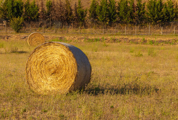 Close up of Hay bales, rural scene in summer
