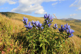 wild flowers on mountain meadow - 215059245