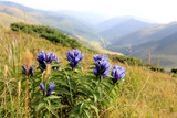 flowers in mountains - 215059249