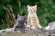 two adorable kittens posing outdoors in summer