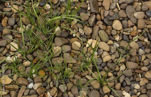 Aluminium Stenen Grass in the rocks