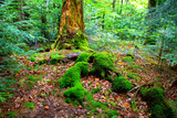 green woods in forest - 215084875