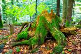 green wooden stump - 215084879