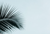 Palm leaves silhouette against clear sky. Creative minimalism. Copy space for text - 215086686