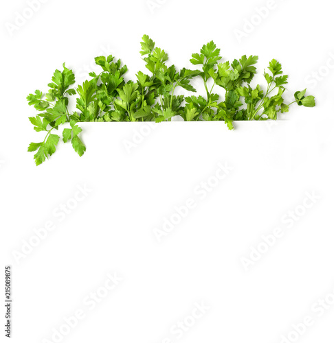 Photo with parsley. A frame of parsley. Botanical image isolated on white background - 215089875