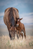 Mare with young Colt