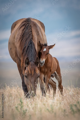 Canvas Paarden Mare with young Colt