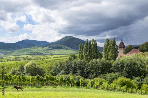 Leinwanddruck Bild Blick über Weinfelder auf den Pfälzerwald