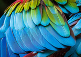Close up of parrot feathers for background.