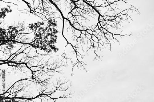 szara-korona-drzew