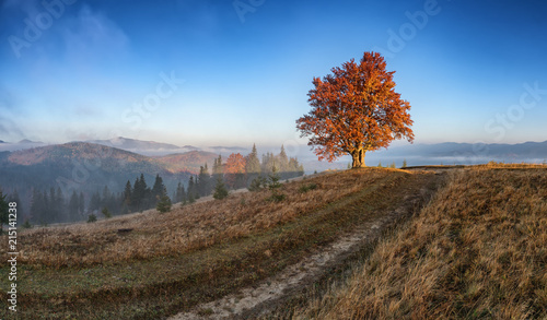 In de dag Landschappen The first sun rays on lonely beech tree in foggy autumn landscape.