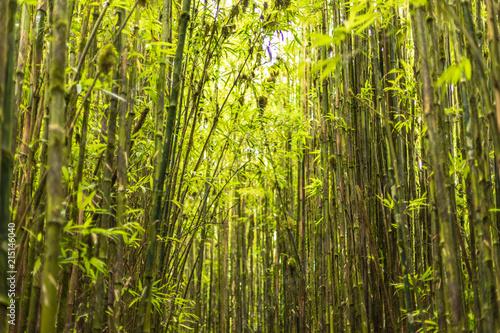 Aluminium Bamboe Ascension Island