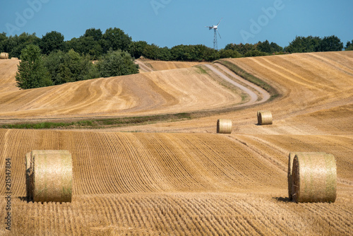 Foto Murales Mown cornfield with big round hay bales - with a trail in the background