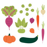 Set, collection of fresh autumn, fall vegetables. Beet, onion, pumpkin, zucchini, kohlrabi, carrots, brussels sprouts, turnip. Vector vegetables in cartoon style. - 215185226